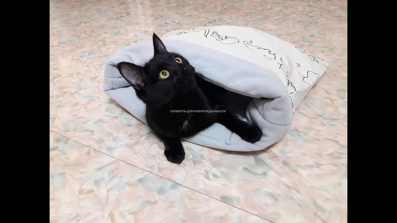 Вязка британских котиков. Кошка испугала всех ! - YouTube