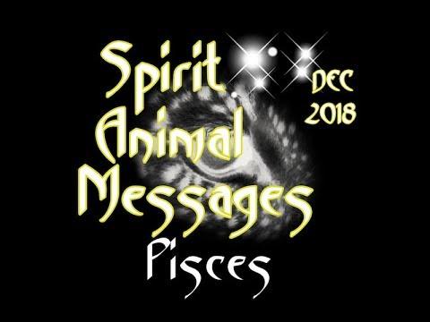 pisces-animal-spirit-message-december,-2018
