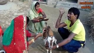 सकरी क बकरी सोना हगलक //maithili comedy