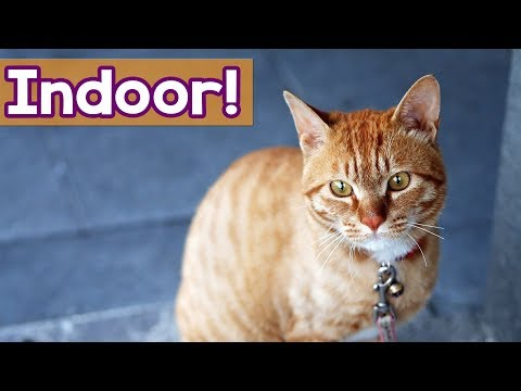 Music For Cats: 4 Hour Music For INDOOR Cats! Entertain your Kitty With 4 Hours of Relaxing Music!