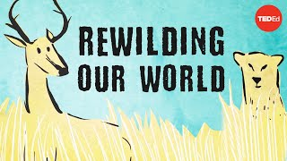 From the top of the food chain down: Rewilding our world - George Monbiot