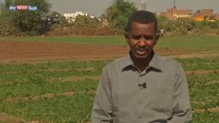 مبادرة لتشجيع الزراعة المنزلية في السودان