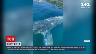 Новини світу: неподалік італійського Неаполя помітили гігантського сірого кита