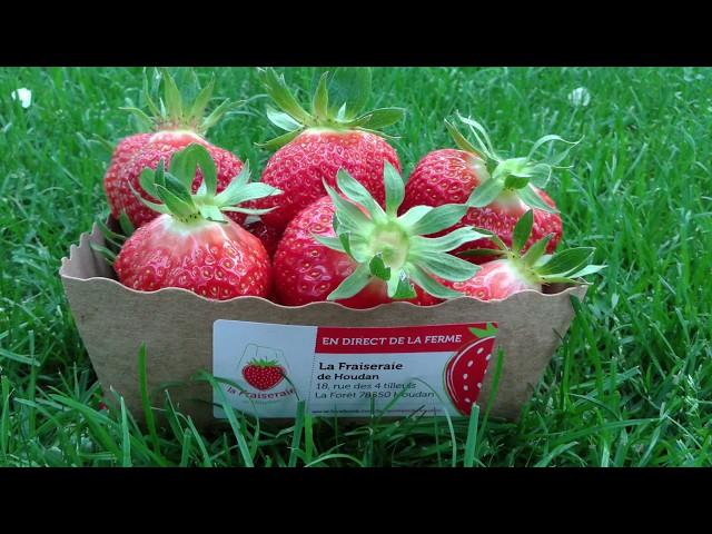 La fraiseraie de Houdan - Salon Saveurs et jardins 2018