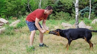 Durable Dog Training Equipment. Rotty's Having Fun With French Linen Bite Tug