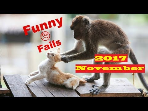 FUNNY PET AND ANIMAL FAILS 🐶🐱 Funniest Cute Dog and Cat Pet Animal Fails November 2017 !