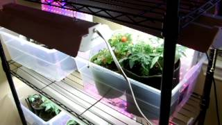 Grow Your Vegetables Indoors During The Winter Months!