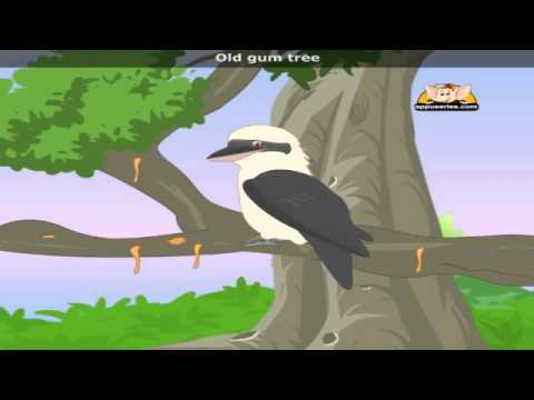 Kookaburra with Lyrics - Nursery Rhyme