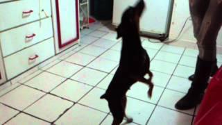 Brighit Doberman Bailando