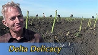Growing California video series: Delta Delicacy