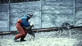 Волонтеры - забота о бездомных животных