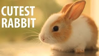 Cutest Rabbit - the cutest baby bunny rabbit compilation ever