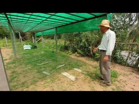 Low Cost, Self Sufficient Homestead Part 2