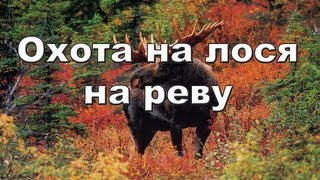 Охота на лося на реву видео онлайн 2012-2013 Moose hunting in Russia.