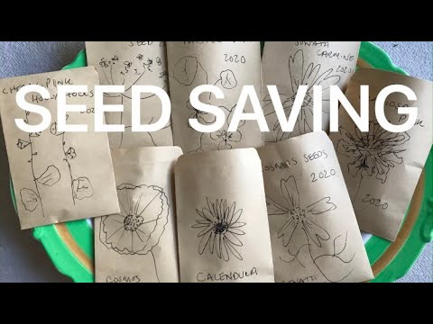 Collecting, harvesting and saving your own flower seed