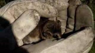 marsupial en chile