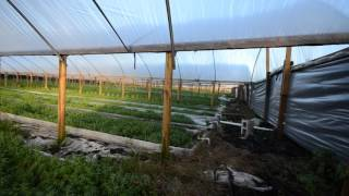 KHMER FARM IN FLORIDA # 8