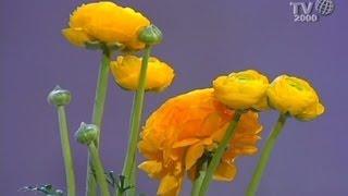 Le piante e i fiori della primavera: Amedeo Cetorelli consiglia come curarle