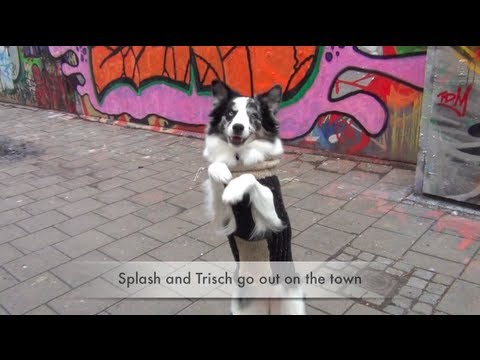 Splash and Trisch Go Out on the Town-dog training