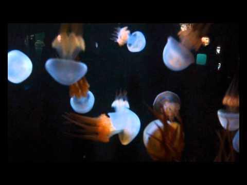 Медузы арбузы видео | We are happy jellyfish