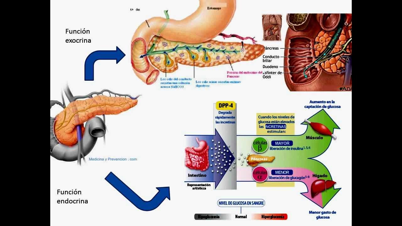 mapa mental pancreas.wmv - YouTube