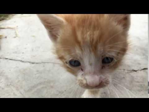 Savage cat attack
