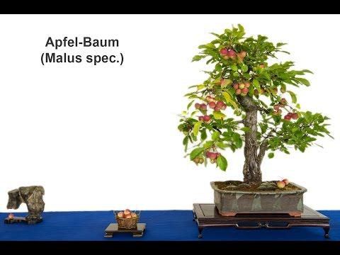 Ausstellung über Bonsai des AK Aichtal-Filder 2016