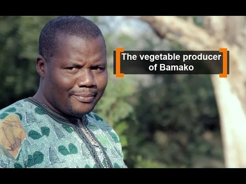 Mali: The vegetable producer of Bamako
