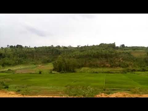Scenery of rice fields in Huye, Rwanda 2