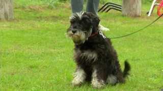 BIGBANK - Koertekool: Mida pidada silmas koera võtmisel?
