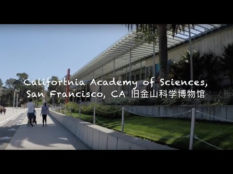 Vlog #1 Weekend at California Academy of Sciences and Golden Gate Park  加州科学博物馆&金门公园