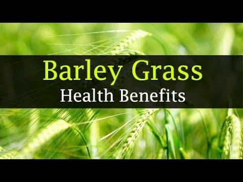 10 Barley Grass Benefits Weight Loss, Skin, Juice