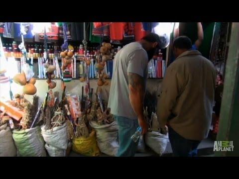 Illegal Rhino Market | Battleground: Rhino Wars