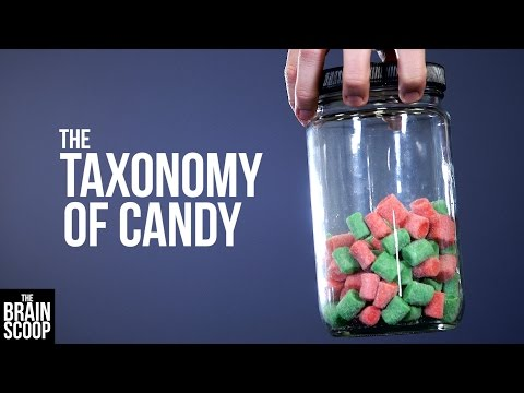 Video image: The taxonomy of candy