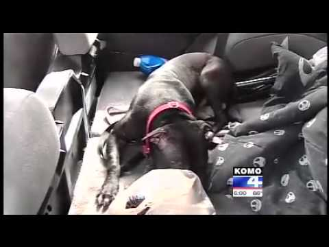 Rescued Dog Protects Owner From Carjacking