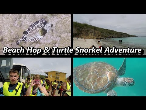 Beach Hop and Turtle Snorkel  - Curacao