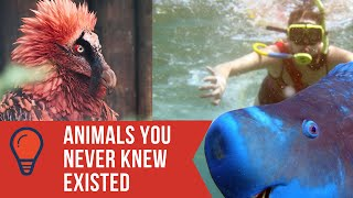 Animals You Never Knew Existed #2