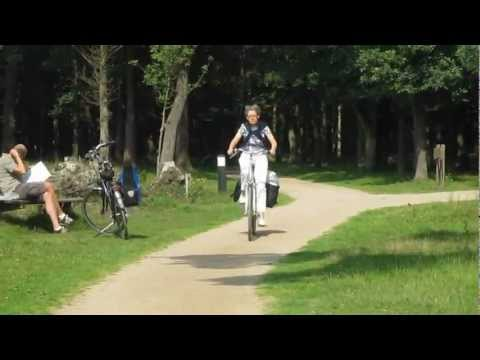 Cycling through the heath (Hilversum, Netherlands)