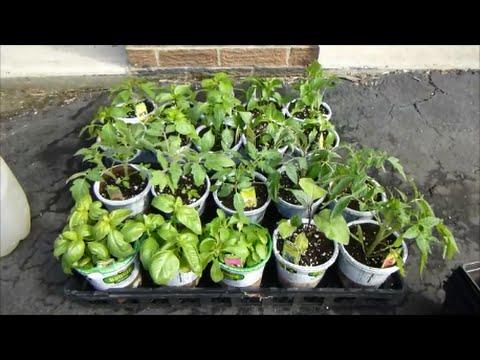 Home Depot Sale on Bonnie Vegetable Plants (5 plants for $10)