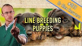 Line Breeding Dogs - a recipe for mutants? - Dog Health Vet Advice