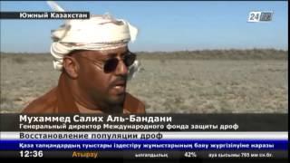 В Южном Казахстане 2 тысячи дроф-красоток выпущены в природную среду(В Южном Казахстане 2 тысячи дроф-красоток выпущены в природную среду., 2014-04-20T06:50:09.000Z)