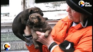 CRYING Puppies RESCUED From Under A House | The Dodo