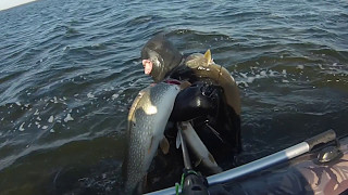 Осенняя охота на щуку. Подводная охота на щуку в Дагестане. Каспий.(Подводная охота на щуку в Дагестане, Крупные щуки каспия, 2014 год вк- https://vk.com/id206279335 одноклассники- http://ok.ru/profil..., 2016-10-09T19:53:39.000Z)