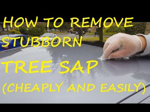 Remove Hard Tree Sap From Car Paint
