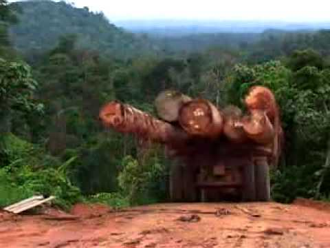 Deforestation in Indonesia ( movie trailer )