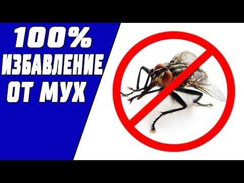Вопрос: Как отогнать мух от мокрого белья?