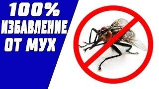 видео Как избавиться от комаров в квартире: современные средства, народные способы