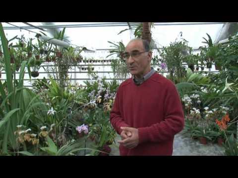 orchidee grisy suisnes