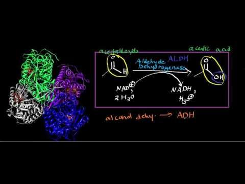 Aldehyde Dehydrogenase: Physiology. Biochemistry, and Mechanism