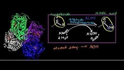 hqdefault - Aldehyde Dehydrogenase Diabetes